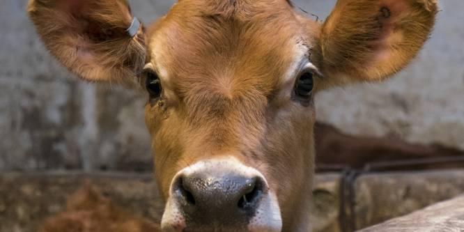 Naar deze documentaire moeten vleeseters echt kijken