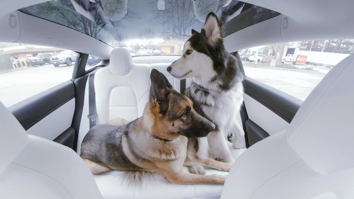 Dog Mode in de Tesla Model 3