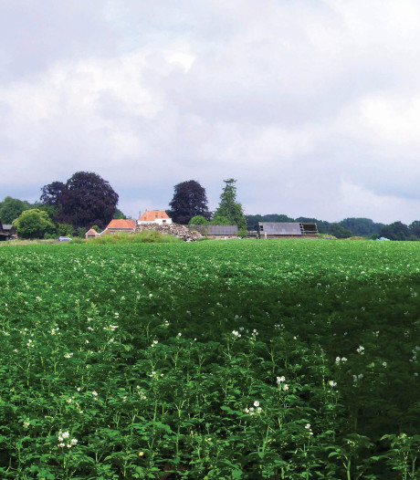 Stormloop op vacature visiemaker in Raalte