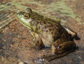 Reptielen en amfibieën zien af na een warm en droog 2020