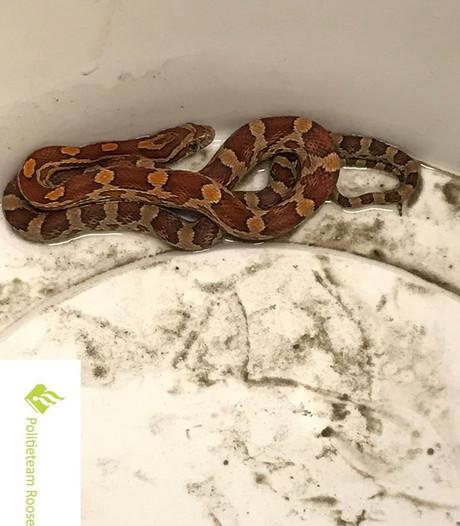 Gevonden slang Willemstad: dier weer terecht bij eigenaar