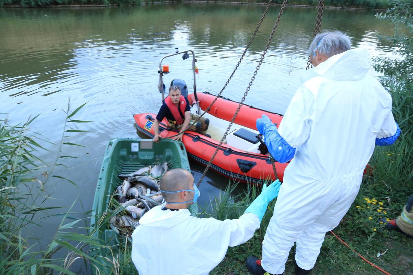 De brandweer haalde maandagavond opnieuw honderden dode vissen uit de fortgracht.