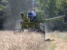 Veluwse kruiprogge is klaar voor de oogst
