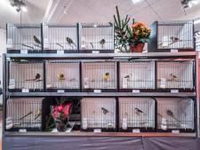 Zoetermeerse vogels kwetteren mee tijdens wereldkampioenschappen