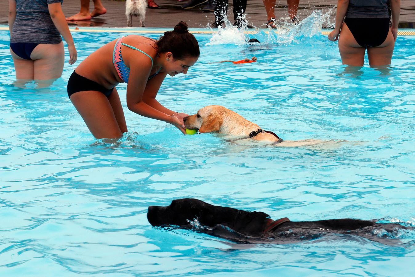Honden en hun baasjes konden zondag samen het water in bij zwembad De Dolfijn.