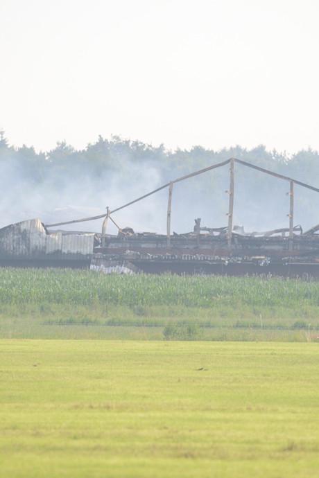 4.000 varkens omgekomen bij brand Heeswijk-Dinther, ook duizenden dieren gered