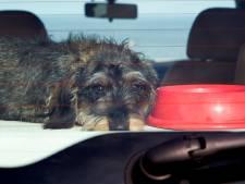 Politie tikt raam in om hond uit snikhete auto te halen