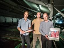 Duurzame vis van pioniers uit Son blijkt onverkoopbaar