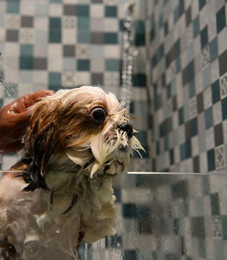 Honden hebben in India nu een eigen vijfsterrenhotel