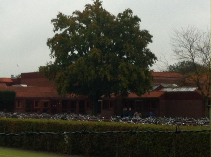 Deze boom op het achterplein van de 'Rooie School' in Uden staat de geplande nieuwbouw in de weg.