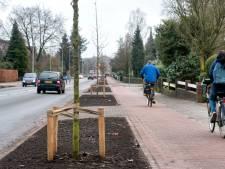 Nieuwe 'mini-eiken' Huijghenslaan in Arnhem vervangen door zilveresdoorns