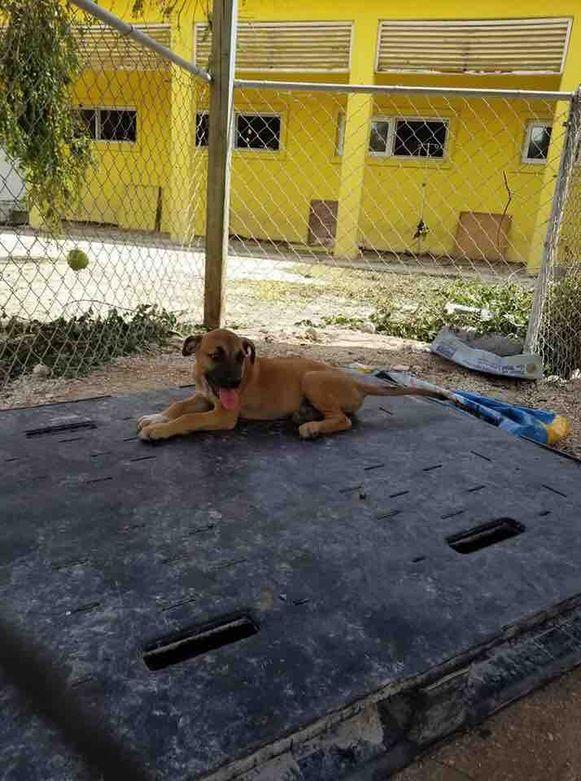 Een geredde hond in het asiel in Freeport.