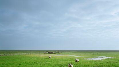 """Natuurpunt waarschuwt: """"Per dag verdwijnt 6 hectare open ruimte in Vlaanderen"""""""