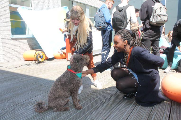 De studenten van Parnas Dilbeek verwelkomden deze namiddag twee knuffelhonden.
