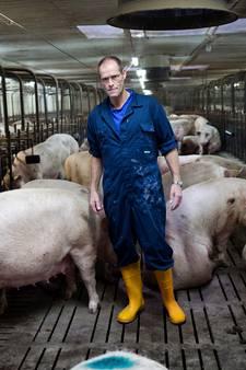 Der Schweinebaron Straathof: dierenbeul of dagelijkse praktijk?