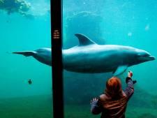Dolfinarium Harderwijk morgen weer open na sluiting van ruim twee maanden
