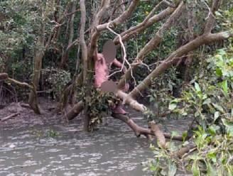 Naakte voortvluchtige gered door vissers uit Australisch moeras met krokodillen en opnieuw aangehouden