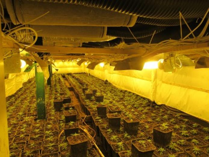 Hennepkwekerijen opgerold in diverse plaatsen in West-Brabant.