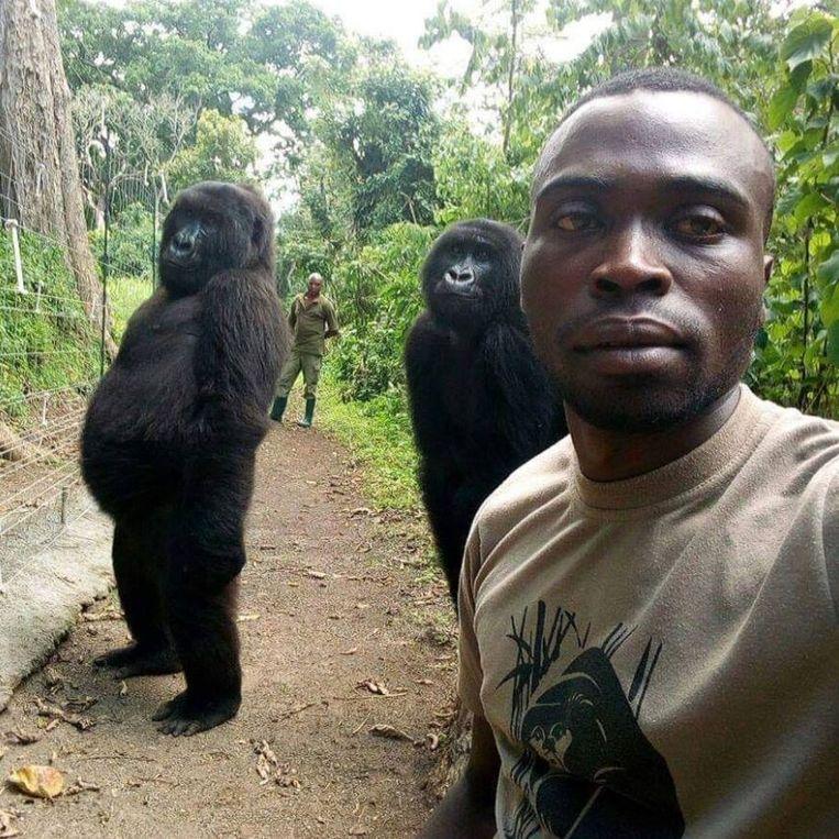 De selfie van ranger Mathieu Shamavu met twee rechtopstaande gorilla's en op de achtergrond een andere ranger.