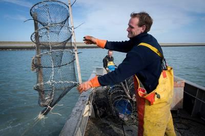 de-visserij-verantwoordelijk-voor-minder-kreeft?-%E2%80%98dat-is-wel-erg-kort-door-de-bocht%E2%80%99