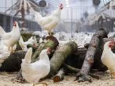 Uitbreiding Duitse kippenstal die Twents natuurgebied bedreigt niet van de baan