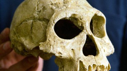 """""""Homo erectus stierf uit omdat hij lui en conservatief was"""""""