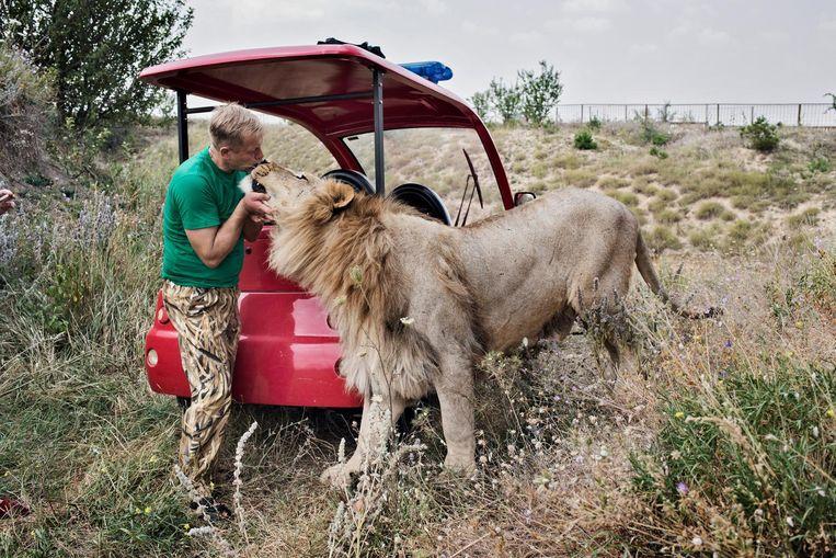 Oleg Zoebkov, eigenaar van twee dierentuinen, met een van zijn leeuwen. 'Ik kan niet wachten tot we hier nieuwe leiders krijgen.' Beeld Yuri Kozyrev/ Noor