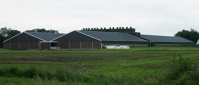 Een veehouderij in Diessen.