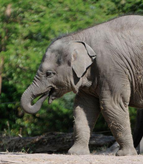 Gemist? Gemeente gooit miljoenen in de strijd tegen sluiting Ahoy en dierentuin - Agenten helpen eenzame vrouw