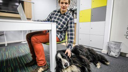 """Blinde Jordy (18) richt eigen IT-bedrijfje op: """"Ik wil nóg eens bewijzen dat mijn handicap geen obstakel vormt"""""""
