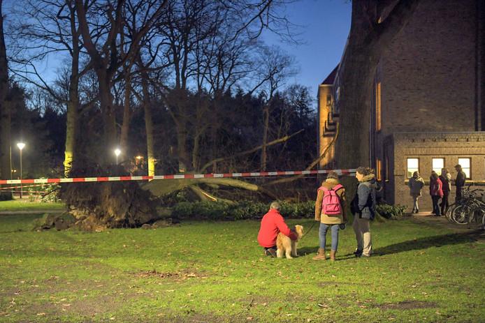 De omgevallen eik in Eikenburg trok maandagavond veel bekijks.