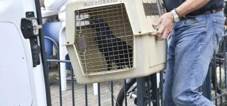 Dierenbescherming neemt 18 roofvogels en een raaf in beslag in woning Breda