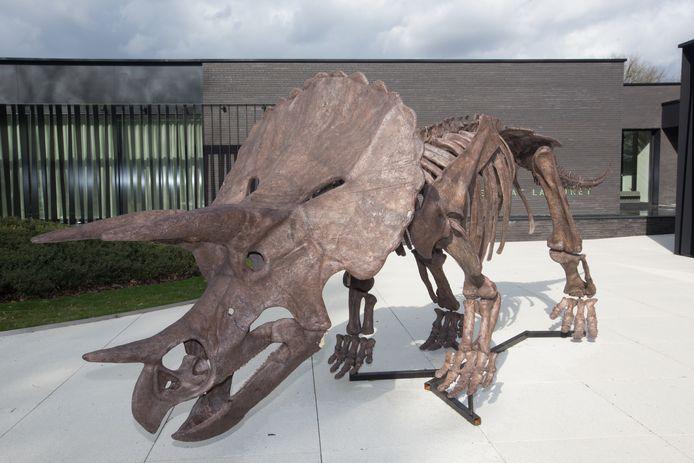 Een replica van de triceratops.