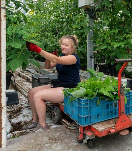 Overal extra coronacontroles, maar fruitkweker René Simons vreest ze niet