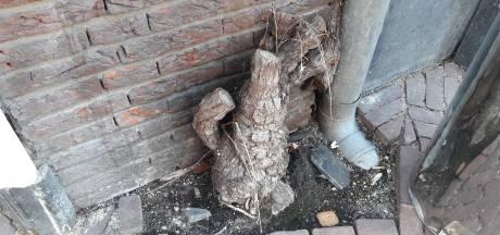 Kans op terugkeer van 'mussensluier' in stadshart Arnhem