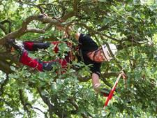 Beste boomklimmers hangen in Deventer plantsoen