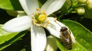 """Wathelet lanceert bijenplan als """"grootschalige natuurtest"""""""