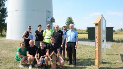 Solitaire bijen krijgen thuis onder windturbines dankzij samenwerking Vasse Kweek en Wase Wind