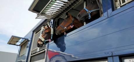 Handel in paarden valt ineens stil door brexit: 'We proberen ons niet te veel zorgen te maken'