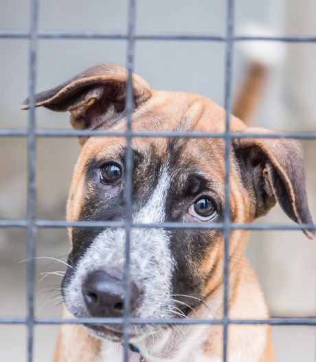 Nieuwsoverzicht | Omstreden puppyhandelaar moet dicht - Politie heeft handen vol aan verwarde personen