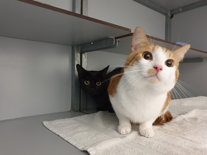Twee katten zijn gevonden in een reismandje midden in het Kloosterpark in De Meern.
