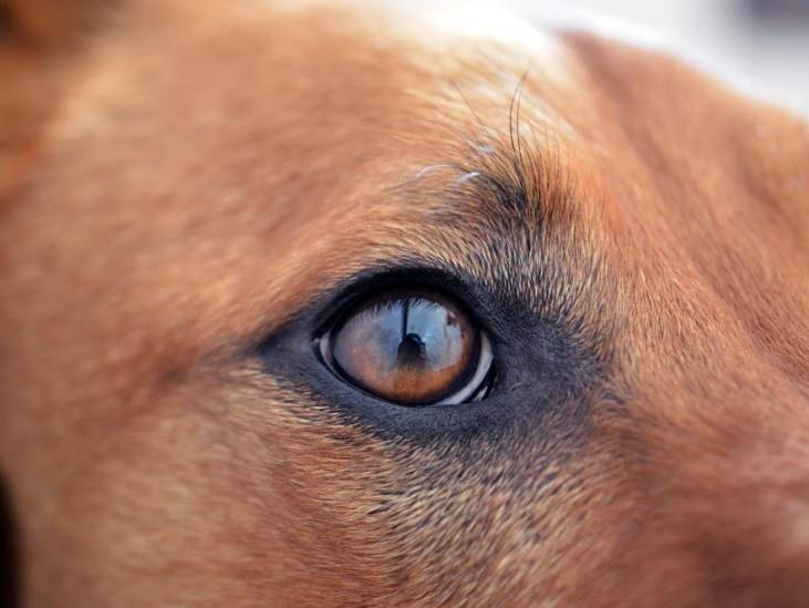 Uitlaten van hond draait uit op mishandeling: 'Ik werd geschopt en geslagen'