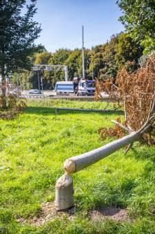 Beverfamilie sloopt bomen in park Heinenoordtunnel