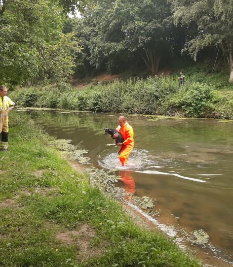 Hond uit het water gered in Tiel: 'dier houdt er alleen natte vacht aan over'