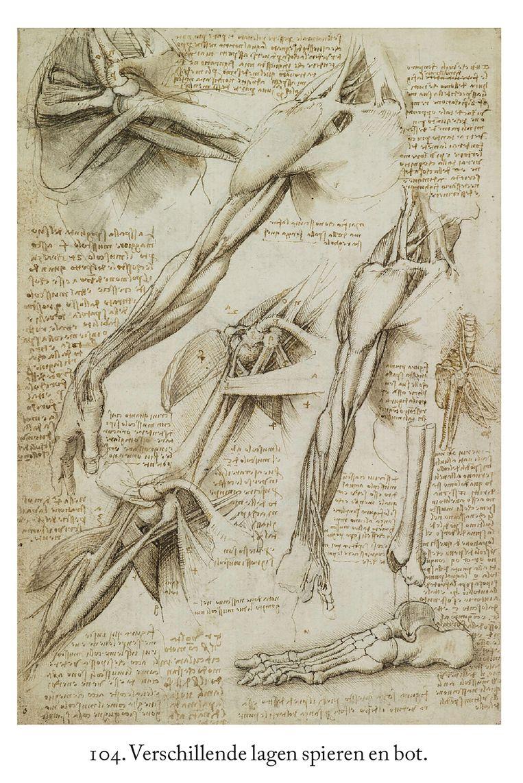 Schets van de spieren van de schouder, de arm en de voet, Leonardo da Vinci, ca. 1510-11 Beeld Leonardo da Vinci, Walter Isaacson Vertaling door Rob de Ridder.Spectrum;