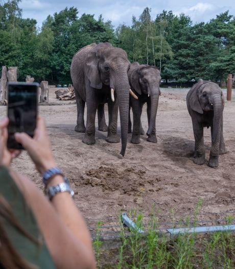 Hoe zit dat met olifantenpaadjes? Je ziet ze overal, behalve bij olifanten van Beekse Bergen