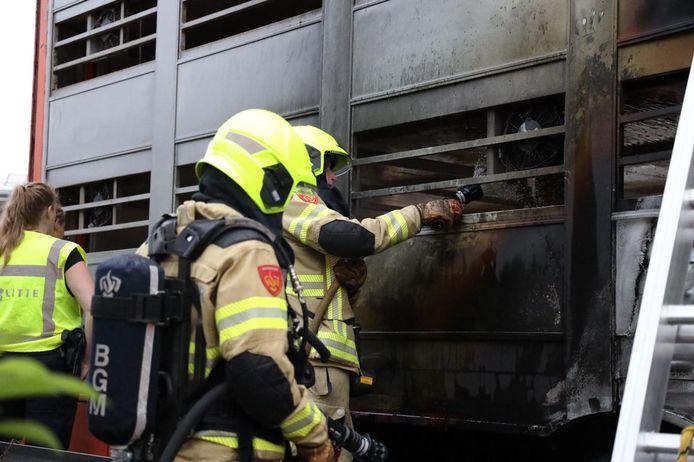 Brandweerlieden bij de vrachtwagens met varkens op de A50.