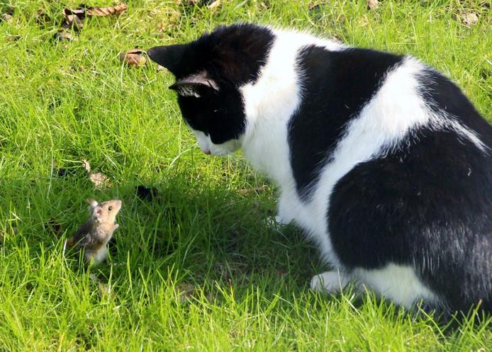 Simba is een echte jager. Hier speelt hij nog even met de muis.