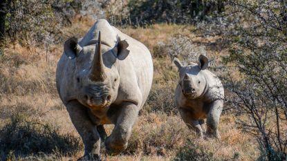 Smokkelaars verbergen 6 kilo hoorn van neushoorns in houten beelden