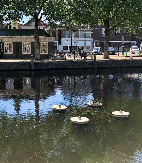 Lief! Familie 'Meerkoet' neemt intrek in Vlaardingse haven, fonteinen blijven voorlopig uit